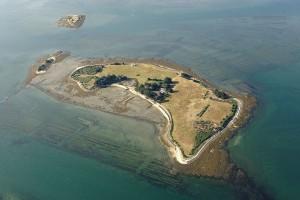 Île Iluric, commune de l'Île-d'Arz, du Golfe du Morbihan (56)